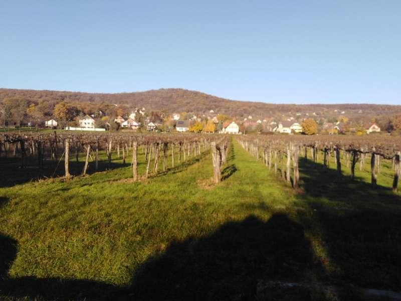Balatonszepezd, Telek - Balatonszepezden 5624 m2 szőlőterület eladó!