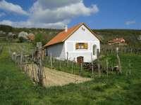 Wine Shop - Imre pince Öreg-hegy Borút 1. - Balatonszepezd