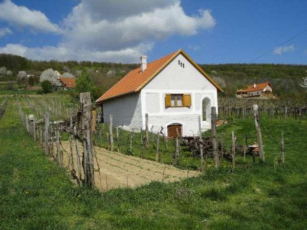 Balatonszepezd, Termelői borkimérés - Wine Shop - Imre pince Öreg-hegy Borút 1.